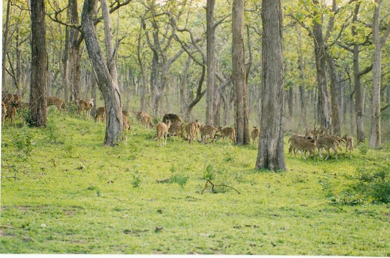 Bandipur National Park, Tiger Reserves in India