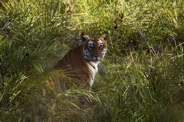 Bandipur, Tiger Reserves of India