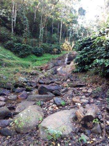 Balur Estate, Chikmagalur (Source)