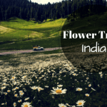 The flowering delights of India – Flower Trails