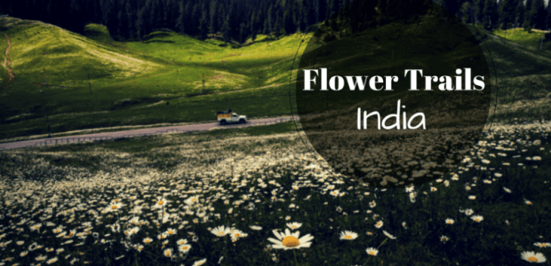 The flowering delights of India - Flower Trails