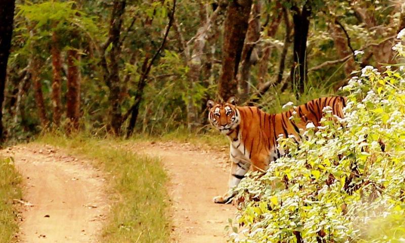 Biligirirangana Hills, Road trips near Bangalore