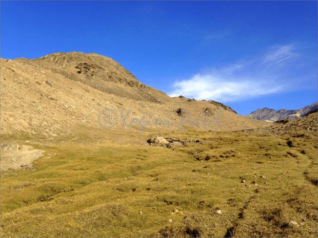 Musing meadows