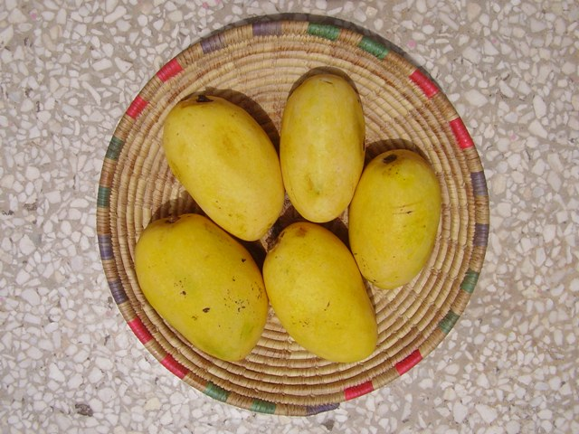 Chausa Mangoes, Mango in india