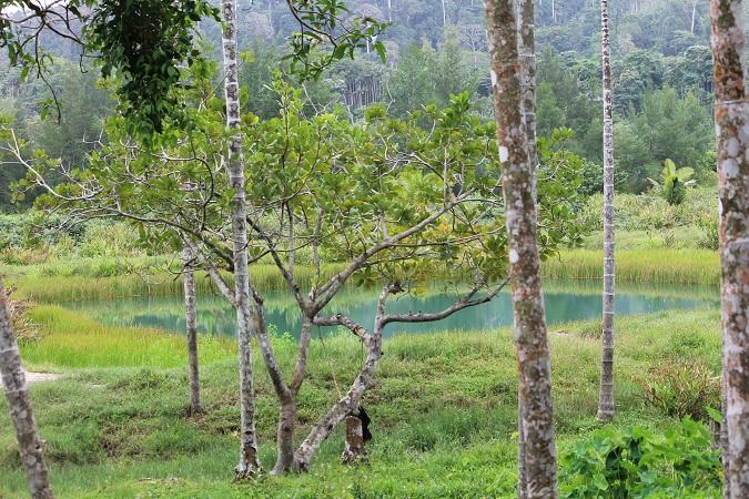 The unexplored Andaman Landscape