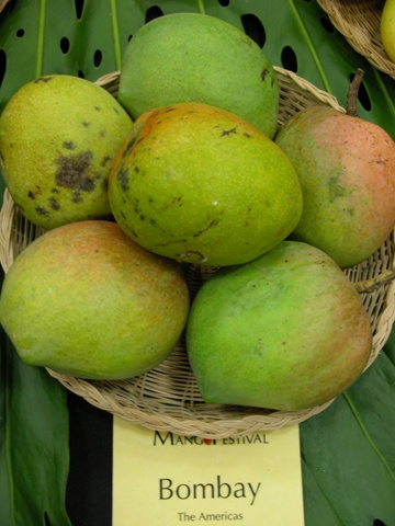 Bombay Green mangoes, Mango in india