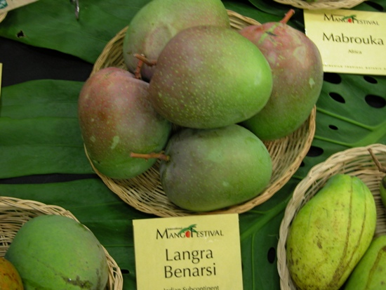 Langra Mangoes, Mango in india