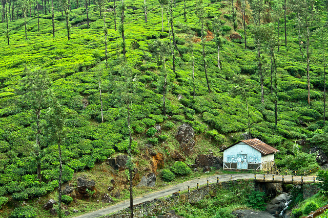 wayanad, Places to visit in august in India