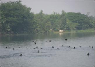 Piyali Islands.
