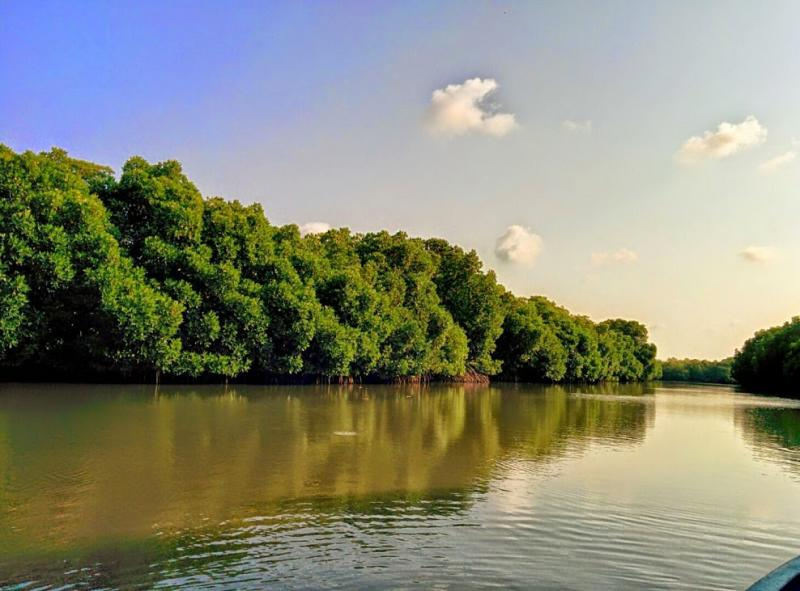 Mangrove Forests in Pichavaram