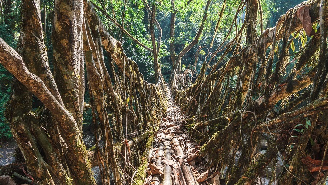 Living Root Bridges, Meghalaya