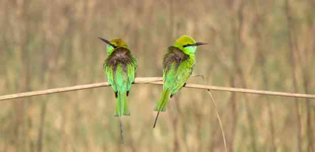 Bird Sanctuaries in India | 11 Places To See Indian Birds