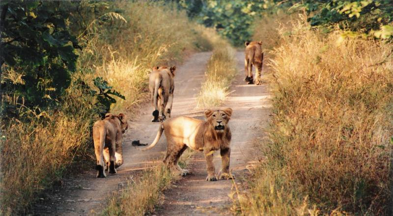 Gir, Holiday Places in November