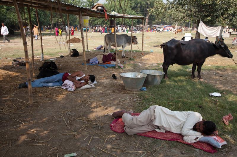Festival Napping_ Sonepur Mela