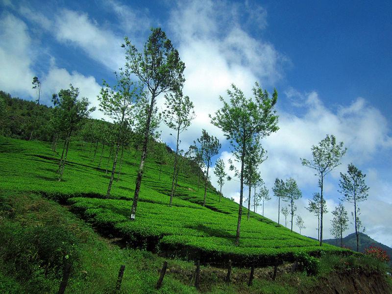 Munnar, Honeymoon destinations in India