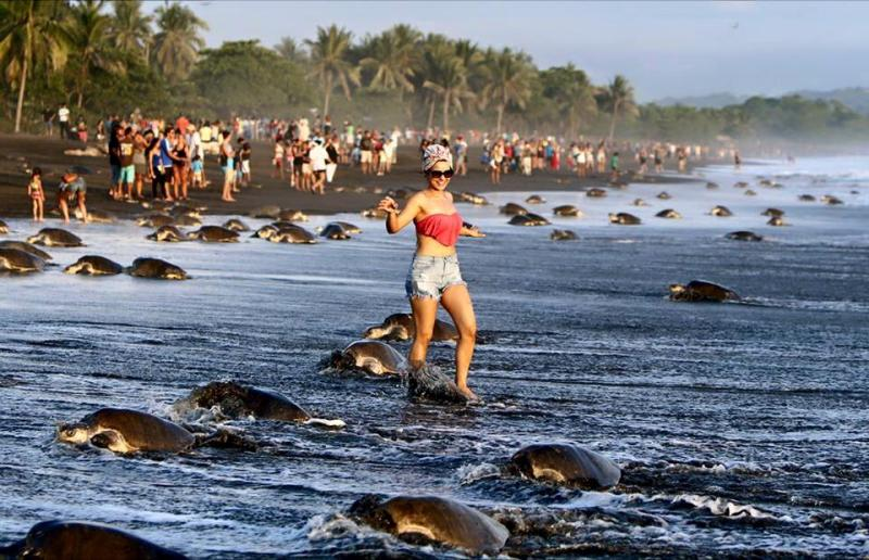 Oliver ridley turtles, eco tourism in India