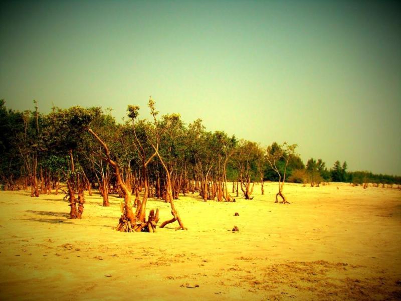 mangrooves near Henry Island