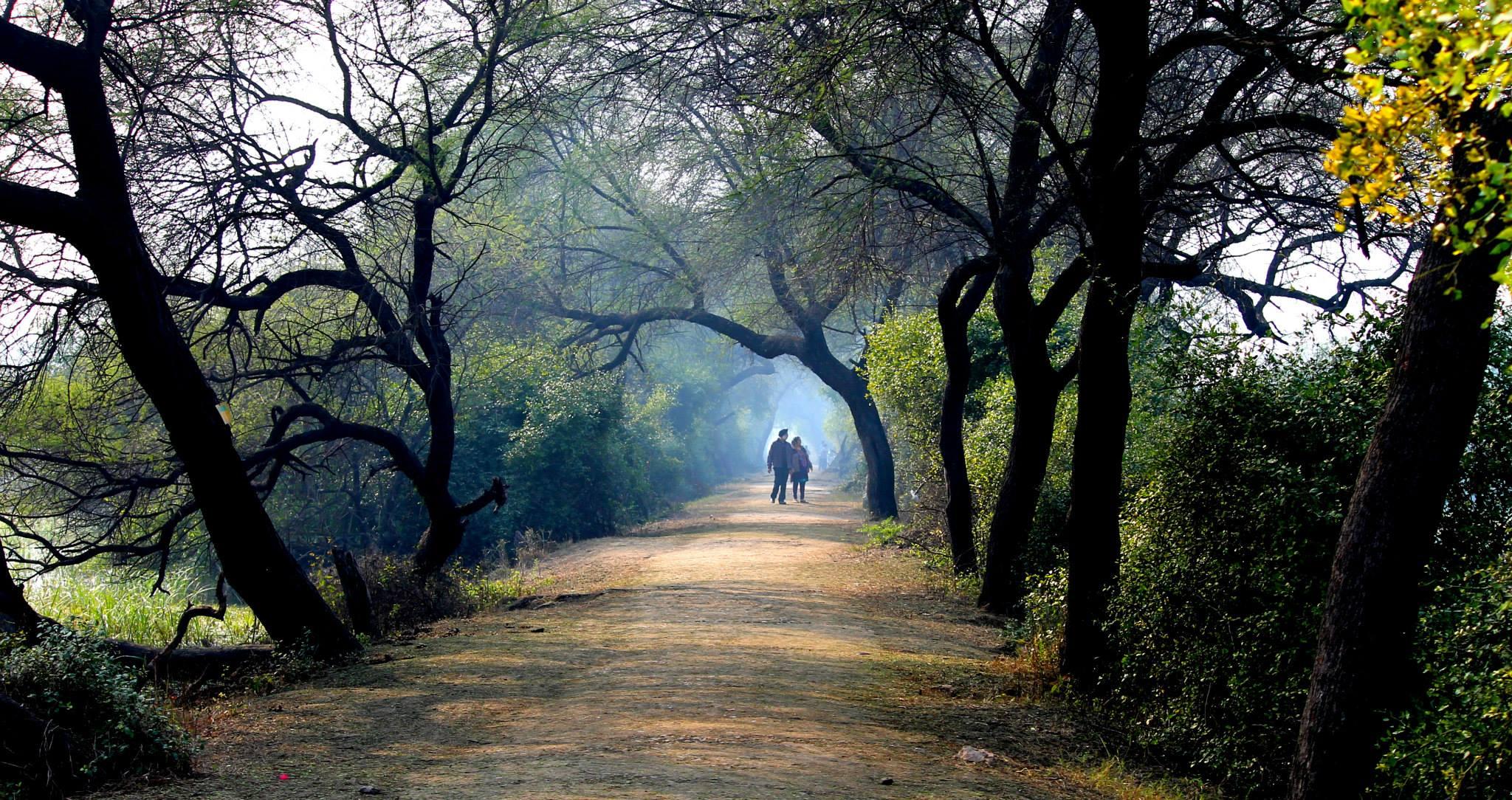 Picnic Spots Near Delhi, Keoladeo National Park