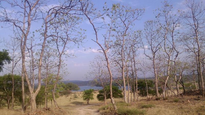 Panna National Park Landscape