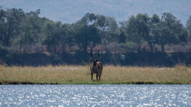 Damdama Lake - Picnic Spots Near Delhi