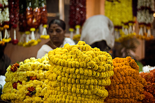 Pongal flowers -  Festivals of Tamil Nadu