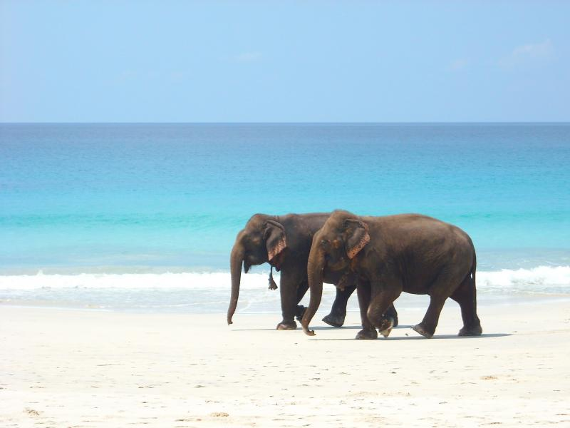 Elephant beach Andaman - Lesser Known Beaches Of India