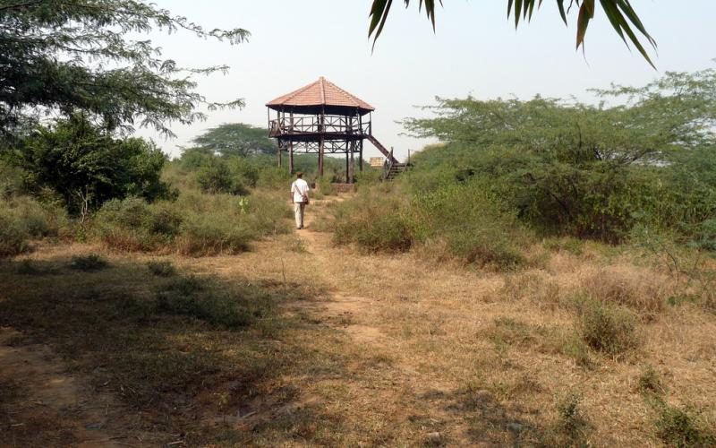 Asola Bhatti Wildlife Sanctuary - Picnic Spots around Delhi