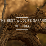 13 Best Wildlife Safaris in India Every Animal Lover Needs To Take!