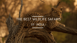 BEST WILDLIFE SAFARIS
