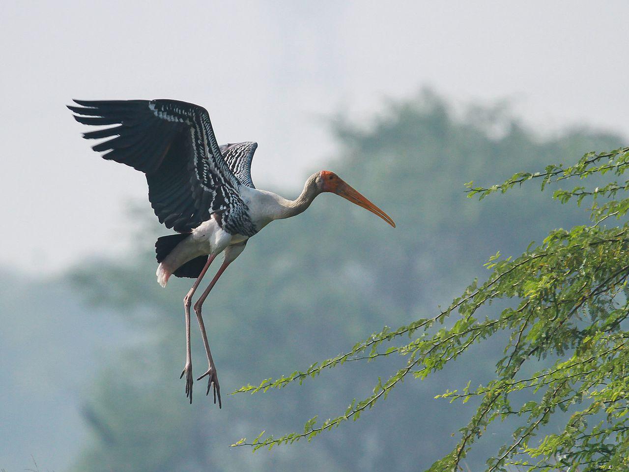 Sultanpur Bird Sanctuary, , Picnic Spots Near Delhi