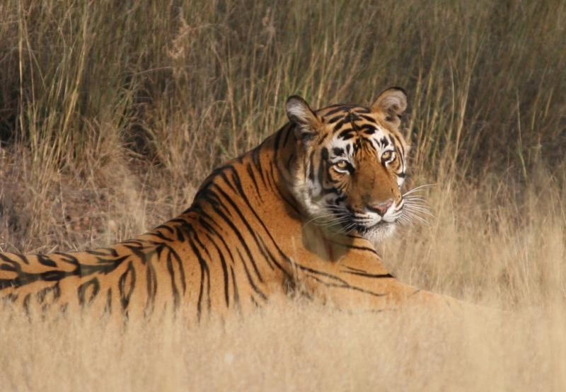13 Best Wildlife Safaris in India Every Animal Lover Needs