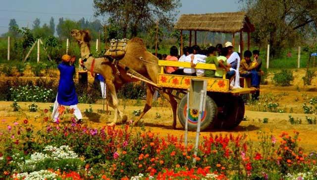 Pratapgarh Farm,  Picnic Spots Near Delhi