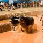 7 Festivals of Karnataka That You Must Plan Your Trip Around!