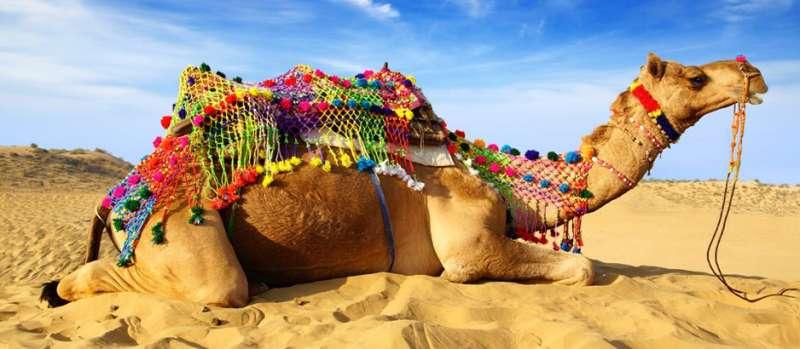 Camel-Festival_Bikaner