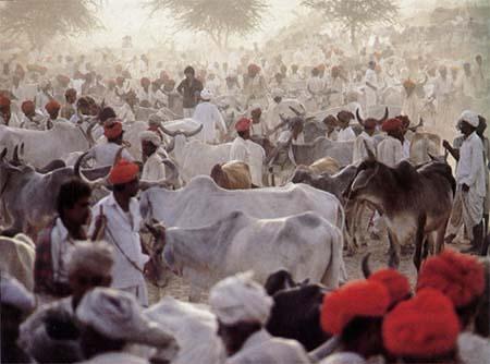 Nagaur-Fair-Rajasthan
