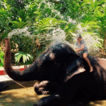 Experience Elephants in Kerala – God's Own Country