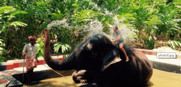 Experience Elephants in Kerala - God's Own Country