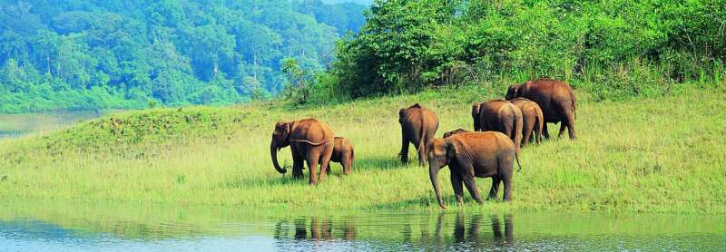 Periyar Wildlife Sanctury