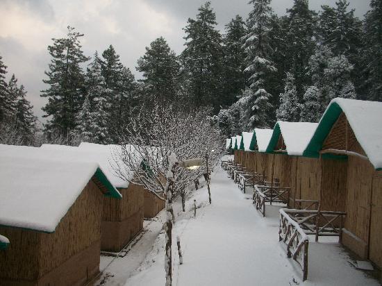Camp Mashobra Greens – Shimla  Yet_Holidify