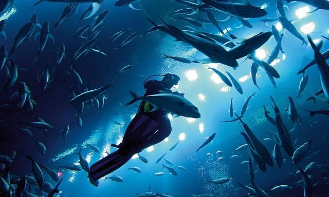 SHARK DIVING in Dubai, Top Adventure Activities In Dubai