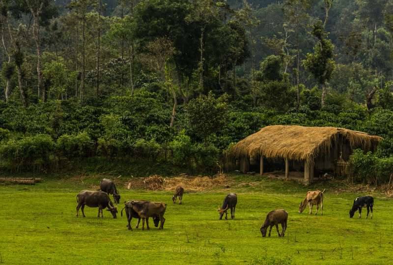 Coorg_Best Places to Visit in June, places to visit for summer vacation