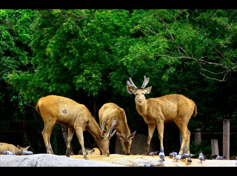 Nehru Zoological Park, , Best Zoos in India
