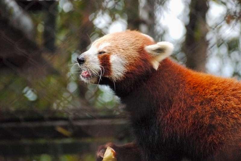 Padmaja Naidu Himalayan Zoo, , Best Zoos in India
