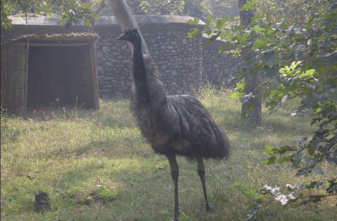 Chhatbir Zoo, Best Zoos in India