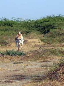 11 National Parks In Gujarat | Wildlife Sanctuaries, Lion & Tiger