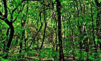 Kareem's Forest Park