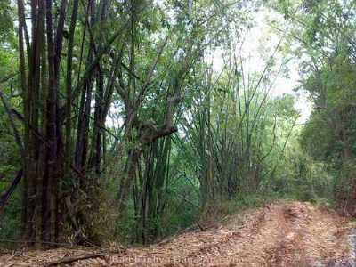 Malom Wildlife Sanctuary