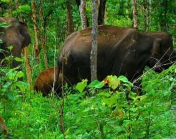 Parappa Wildlife Sanctuary