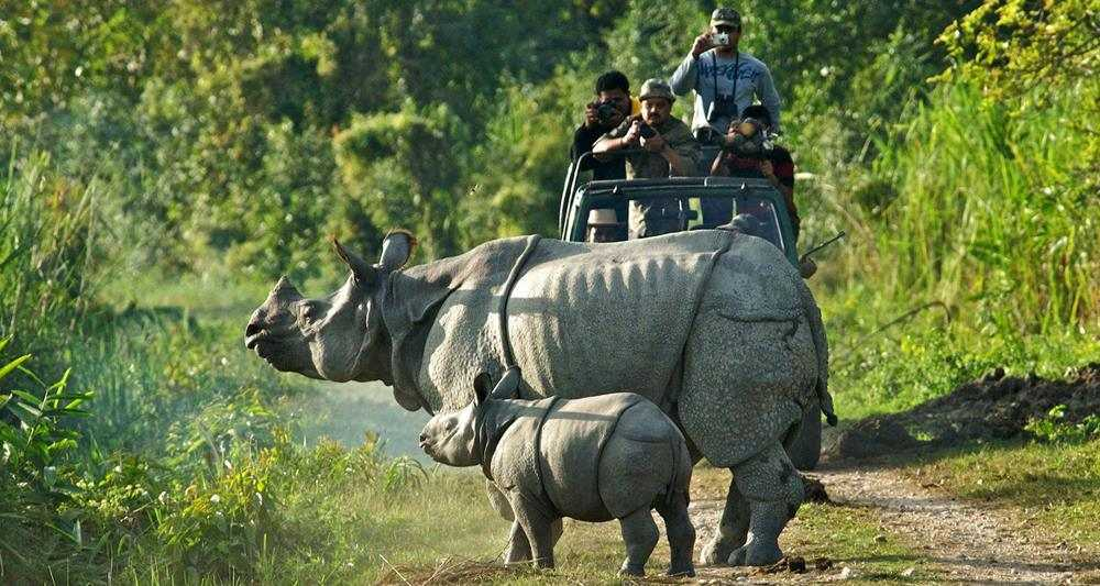 manas national park or manas wildlife The manas wildlife sanctuary world in february 2014 the state party reported on a number of monitoring activities carried out in manas national park, including.