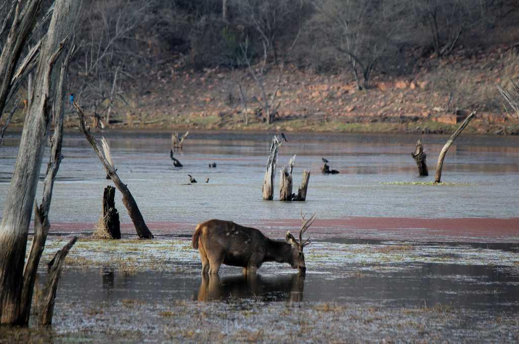 ranthambore national park tourism  2020  tiger reserve